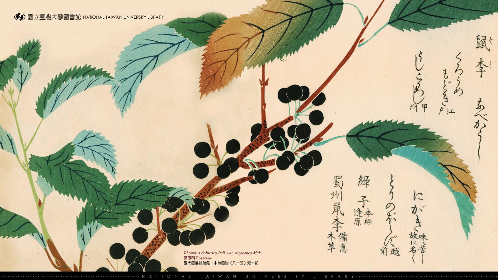 wallpaper 2010 | 国立台湾大学图书馆